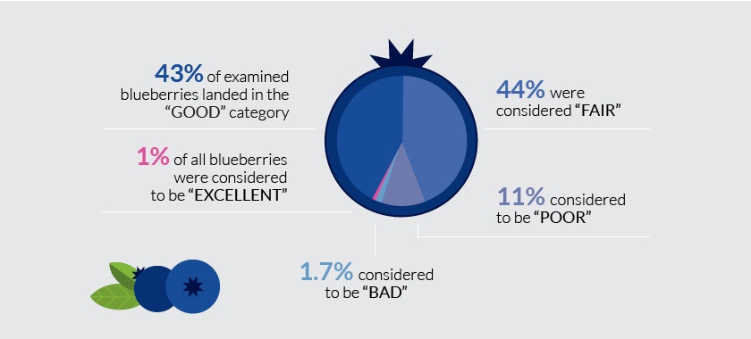 blueberry quality infographics